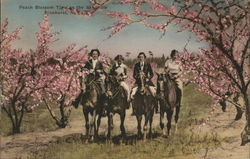 Peach Blossom Time in the Seedhills