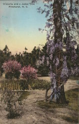 Wisteria and a Judas Tree