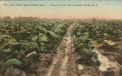 Tobacco Field near Southern Pines, N.C.