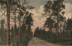 Automobile Road Near Southern Pines, N. C.