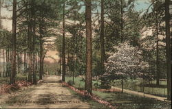 Wooded Avenue