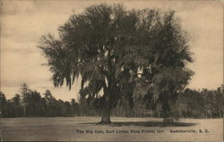 The Big Oak, Golf Links, Pine Forest Inn