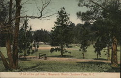 Weymouth Woods Postcard