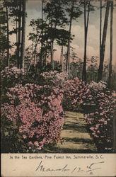 In the Tea Gardens, Pine Forest Inn