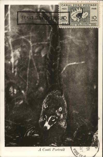 A Coati Portrait Panama Maximum Cards