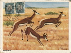 Three Running Gazelles