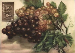 Dark Colored Grapes
