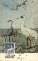 Whooping Cranes and Young, Painting by Louis Agassiz
