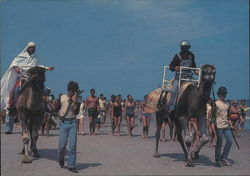Myrtle Beach Camel Racing OR Myrtle Beach Leash Law