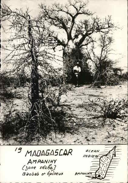 Madagascar Ampanihy (Dry Zone) Baobab and thorny plants