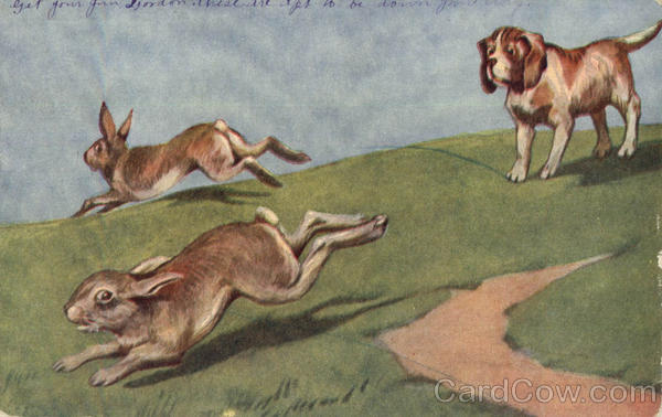 Hound Hunting Rabbits Multiple Animals