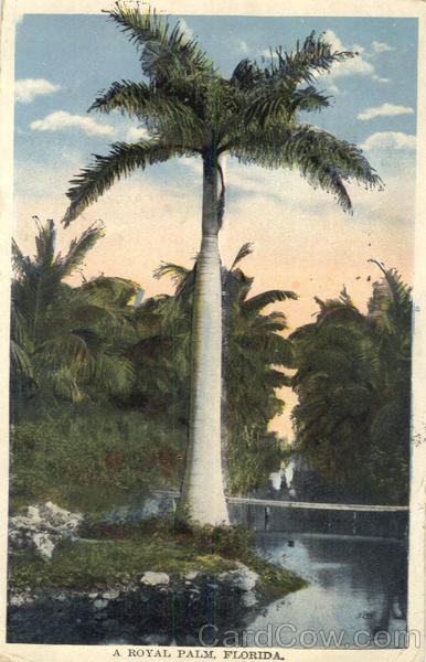 A Royal Palm Scenic Florida