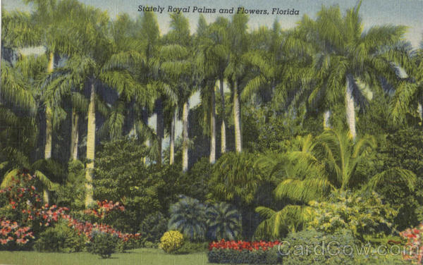 Stately Royal Palms and Flowers Scenic Florida