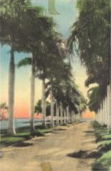 Royal Palms and The Bay