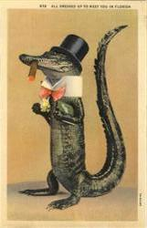 All dressed Up To Meet You In Florida - Alligator