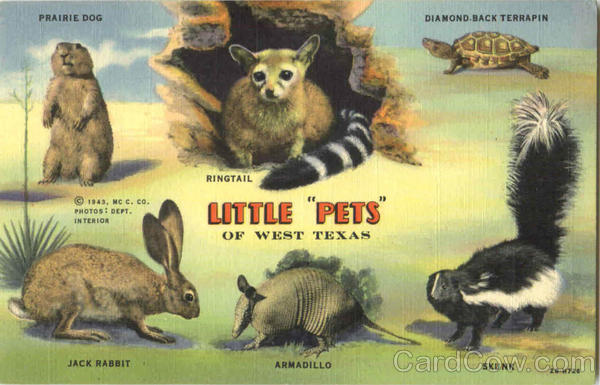 Little pets of west texas multiple animals