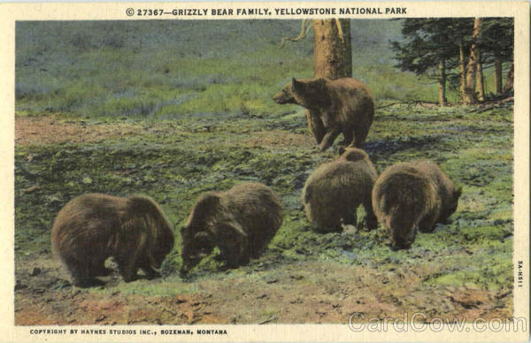 Grizzly Bear Family, Yellowstone National Park