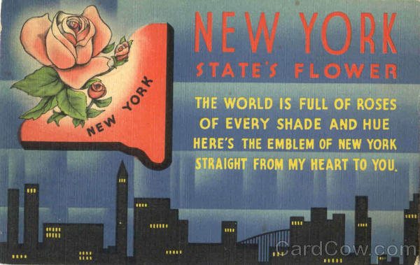 new york state flower picture. New York State#39;s Flower
