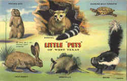 Little Pets Of West Texas