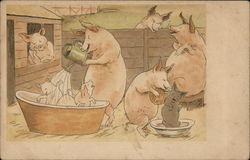 Piglets Getting A Bath