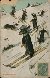 Dachshunds Skiing