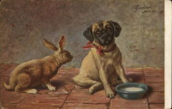 Rabbit Staring at a Pug (Dog)