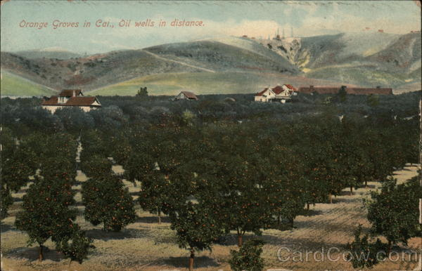 Orange Groves with Oil Wells in the Distance California