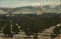 Orange Groves with Oil Wells in the Distance