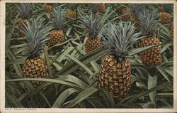 Florida Pineapples