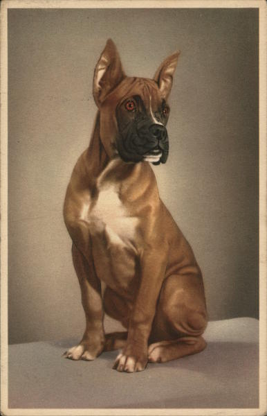 Portrait of a Boxer Dogs