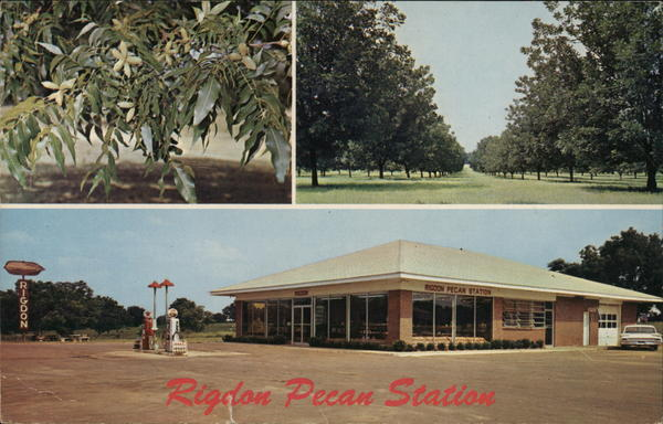 Rigdon Farms Pecan Station Fort Valley Georgia
