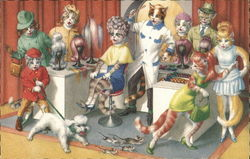 Cats in a salon