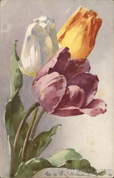 Purple, Yellow, and White Flowers C. Klein