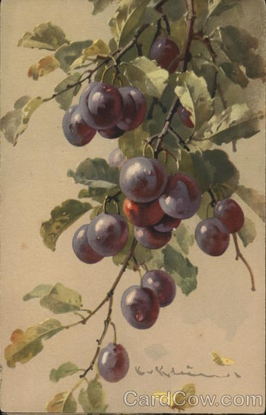 Purple Grapes on Stem with Green Leaves C. Klein