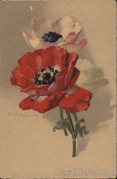 Red and White Flowers with Dark Centers C. Klein