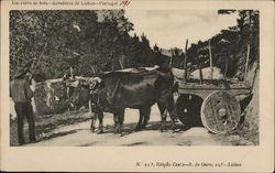 Um carro de bois-Arredores de Lisboa-Portugal
