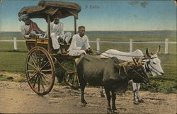 Three Men in Buggy Pulled by Two Oxen