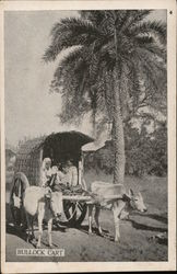 Bullock Cart Carrying People Near Palm Tree
