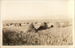 Fine Crop of Grain-Southern Idaho