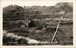 Lava Burnt Tree, Caraters of the Moon Postcard