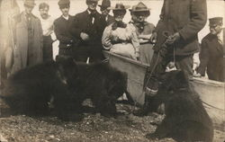 Crowd Watching Captive Bear Cubs Postcard