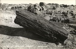 Scene in Petrified Forest Postcard