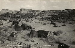 Petrified Forest Postcard