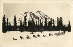 Dog Sled Team Postcard