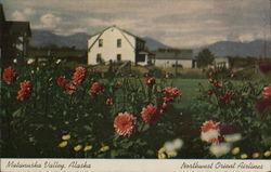 Matanuska Valley Postcard