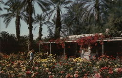 Flowers and Date Palms