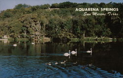 Aquarena Springs