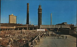 Chicago Stock Yards Postcard