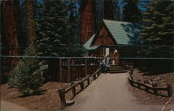 Giant Forest Lodge, Sequoia National Park