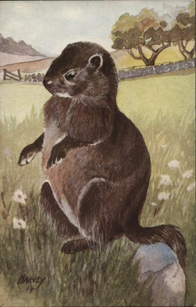 Illustration of Woodchuck